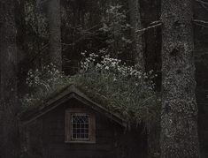 a cottage in the woods Dark Green Aesthetic, Nature Aesthetic, Witch Aesthetic, Gore Aesthetic, Paradis Sombre, Over The Garden Wall, Slytherin Aesthetic, Scenery, Instagram