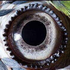 Regardez-les dans les yeux. On a dit, les yeux.