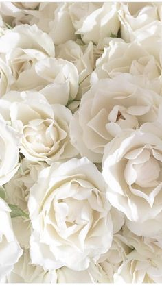 white wallpaper for iphone phone wallpapers Forever white Roses White Roses Wallpaper, White Roses Background, Flower Background Wallpaper, Flower Backgrounds, Iphone Backgrounds, Wallpaper Backgrounds, Iphone Wallpapers, Background Vintage, White Wallpaper For Iphone