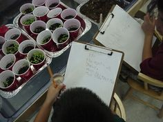 Growing Plants - Observing and Recording