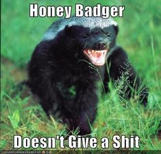 I believe I've found my spirit animal.honey badger don't care, honey badger don't give a shit!definitely found my spirit animal! Badass, Poisonous Snakes, Funny Animals, Cute Animals, Wild Animals, Ssj3, My Spirit Animal, Black Bear, Black Cats