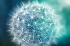 Bokeh Dandelion | Flickr - Photo Sharing!