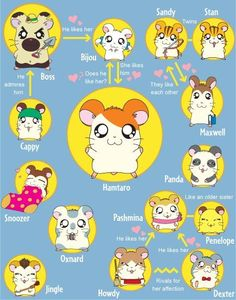 I loved Hamtaro so much that my guinea pig's name was Pashmina :3: