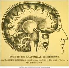 Love, in its anatomical connections – bioephemera