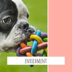 Diy Puppy Toys, Dog Enrichment, Toy Puppies, Boston Terrier, French Bulldog, Dogs, Animals, Boston Terriers, Animales