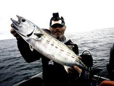 Pêche au leurres de surface en Mer Fishing Techniques, Sea Fishing, Fishing Equipment, Saltwater Fishing, Exit Room, Fishing Tackle
