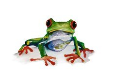 Tree Frog watercolour painting 8x10 fine art by christydekoning