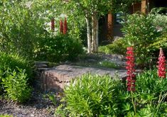 """More low maintenance ideas for a front yard. The large stone  represents an outcropping surrounded by mixed plantings of native  and non-native plants. It is all """"meant"""" to be."""