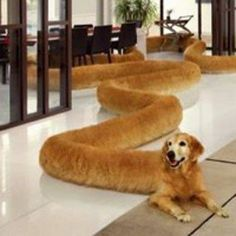 Long doggo