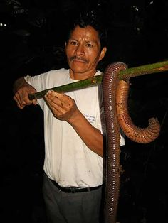 Photo: A large bodied earthworm (thought to be Martiodrilus crassus) spotted in Ecuador this week. It's an astonishing metres long! Via Project Noah. Worm Farm, Equador, Earthworms, Big Fish, Fishing Tips, Fishing Stuff, Fishing Humor, Going Fishing, Kayak Fishing