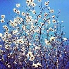 Early bloomers in my backyard.