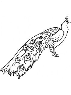 Chinese New Year Coloring Pages 0nline See More Peacock Page