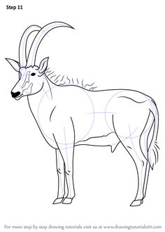 Learn How to Draw an Antelope (Wild Animals) Step by Step : Drawing Tutorials
