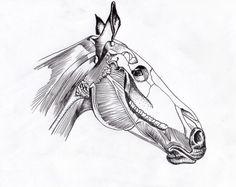 Pi-pa-paardenkopf