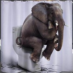 #Elephant #sitting on toilet bathroom #shower curtain 180cm x 180cm polyester hoo,  View more on the LINK: http://www.zeppy.io/product/gb/2/162062807187/