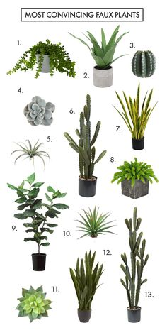 How to Find The Most Convincing Faux Plants! (click through for links)