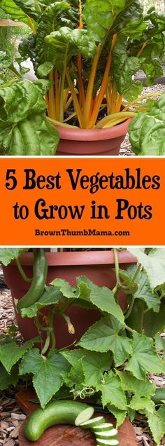 You DO have space for a #garden! These 5 #vegetables grow great in pots and you can enjoy fresh vegetables all summer long. #gardening #containergardening #summervegetablegardening #gardeningvegetable #vegetablesgardening