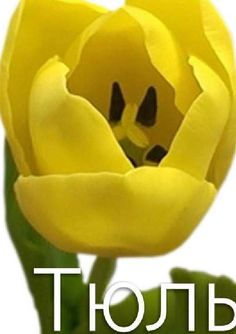 Мастер-класс по керамической флористике. Тюльпан