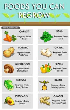 How many of you throw away the peels and stems of veggies you use to make dishes/consume? Kitchen scraps is the maximum waste a house creates but it isn't a problem for the environment since it is mostly biodegradable. It is possible to regrow many of the veggies from there scraps; not only will this …