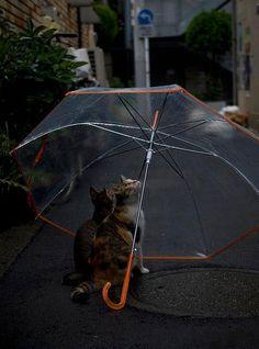 The Rain ツ