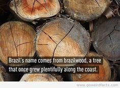 brazilwood