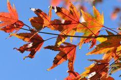 Nieuw in mijn Werk aan de Muur shop: Herfstbladeren in felle zon