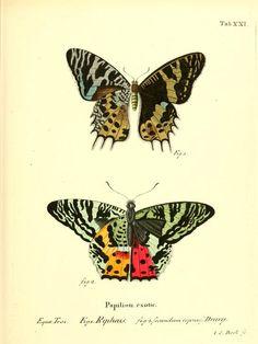 Die ausländischen Schmetterlinge in Abbildungen...