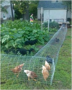 22 Low-Budget DIY Backyard Chicken Coop Plans DIY Chicken Tunnel-design a specific area for the chickens to walk through the garden. The post 22 Low-Budget DIY Backyard Chicken Coop Plans appeared first on Outdoor Ideas. Backyard Chicken Coop Plans, Building A Chicken Coop, Chickens Backyard, Chicken Garden, Chickens In Garden, Chicken Fence, Chicken Coop Run, Chicken Home, Backyard Farming