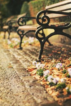 Park bench in autumn with Dash Hans Christian, Cool Photos, Beautiful Pictures, Beaux Villages, Seasons Of Life, Photos Voyages, Autumn Leaves, Autumn Harvest, Autumn Fall