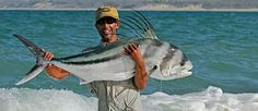 Roosterfish caught fly casting in the surf, Baja, Mexico../