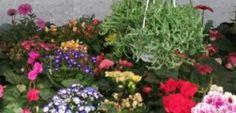 Nuevas flores en el jardin