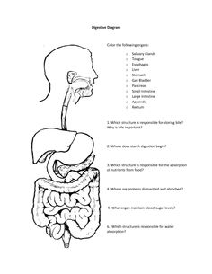 34 Best Science: Human Anatomy: Digestive System images