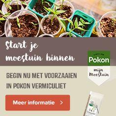 Vijg - Diana's mooie moestuin Eclairs, Permaculture, Chutney, Vegetable Garden, Sweet Potato, Food And Drink, Beef, Low Carb, Fruit
