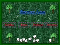PPT - Warstwy lasu PowerPoint Presentation - ID:4253051