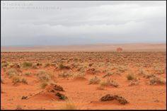 Estepa del Sahara septentrional