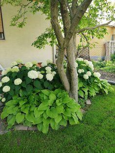 Garden Deco, Greenhouse Gardening, Outdoor Plants, Garden Design, Home And Garden, Landscape, Vintage, Gardens, Animals