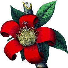 Red Botanical Flower Image! - The Graphics Fairy