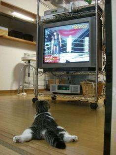Cats (136 photos) (64)