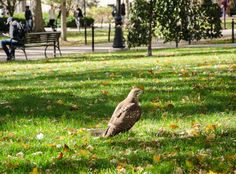 Wildlife can be spotted all across campus. This hawk was spotted next to Old Main as students pass by. Ag Science, Animal Help, Farm Animals, Wildlife, Students, Pets