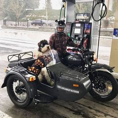 Ural Motorcycle, Motorcycle Garage, Motorized Trike, Bicycle Sidecar, Biking With Dog, San Bernardo, Custom Cycles, Harley Bikes, Motorbikes