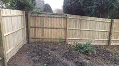 New fence feb 2016 (Now bee friendly corner)