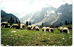 Overa. Located near Pahalgam