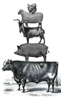 Orchestrating Diversified Livestock Illustration by Kathy Voth Vintage Farm, Vintage Ephemera, Vintage Paper, Vintage Pictures, Vintage Images, Farm Images, Grafik Design, Livestock, Farm Animals