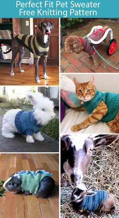 Free Knitting Pattern for Perfect Fit Pet Sweater - This simple sweater design c. - Knitting patterns, knitting designs, knitting for beginners. Knitted Dog Sweater Pattern, Knit Dog Sweater, Knitted Cat, Dog Pattern, Knitting Patterns For Dogs, Knitting Machine Patterns, Loom Knitting, Baby Knitting, Free Knitting