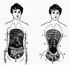 Neuronas enlatadas: Anatomía