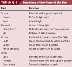Anatomy and Physiology of the Eye. Functions of the Parts of the Eye Science Notes, Science Student, Eye Parts And Functions, Opthalmic Technician, Optometry School, Medical School, Eye Structure, Eye Function, Human Body Facts