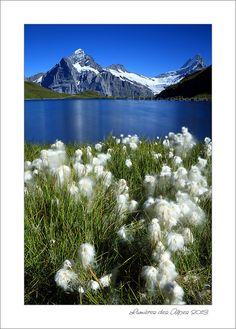 Bachalpsee - Grindelwald - CH Switzerland Places To Visit, Mountains, Nature, Travel, Landscape, Switzerland, Naturaleza, Viajes, Destinations