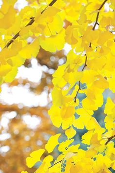 Statement Clutch - Autumn Ginkgo by VIDA VIDA D78X93N