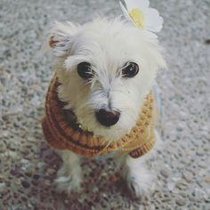 Daisy with her DIY paper daisy #cute #dog