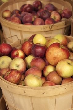 """Fall in WI means """"apple time!"""" We love our apples (as well as Door County cherries), we look forward to annual apple fests, apple pie, caramel apples, apple cider (and HARD cider!). Just look at these beauties from Door Creek Orchard! MMM! I can almost smell them! #MyHometownPins"""